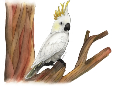 Yellow-crested cockatoo_small