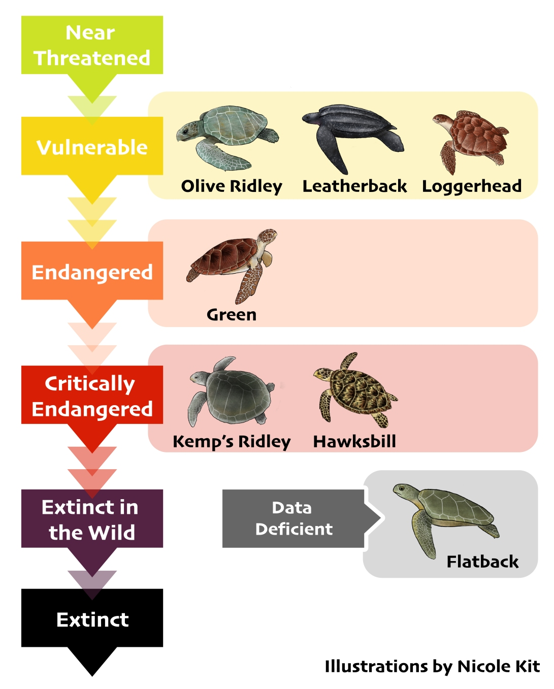 Turtle species chart-01